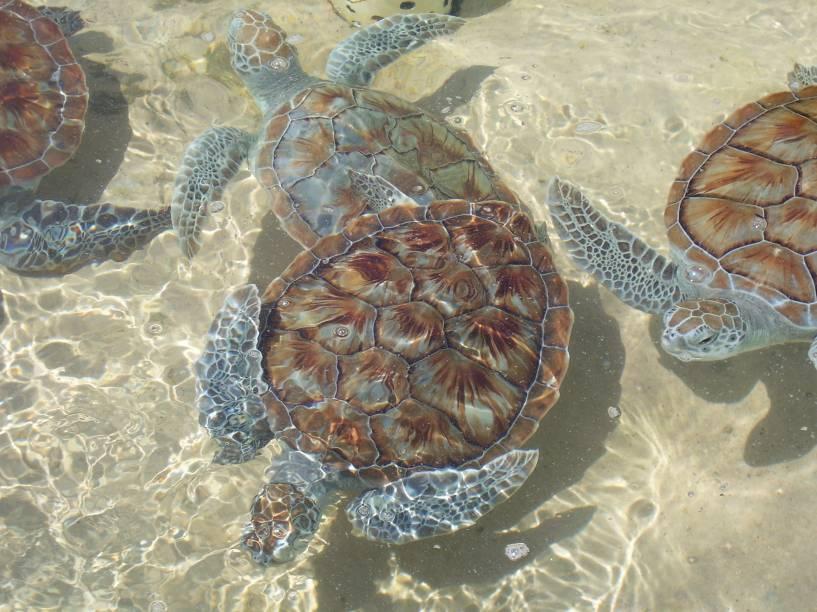 Fazenda de tartarugas nas <strong>Ilhas Cayman</strong>