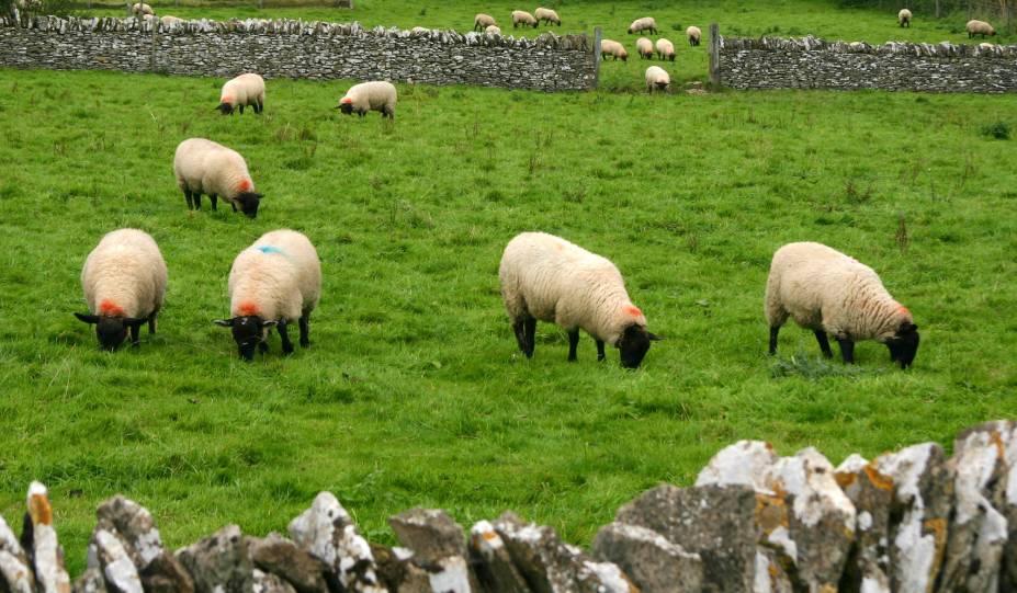 Entre os séculos 17 e 19, a região era internacionalmente conhecida pela qualidade da lã. Até hoje as ovelhas fazem parte da paisagem de Cotswolds: são quase um cartão-postal