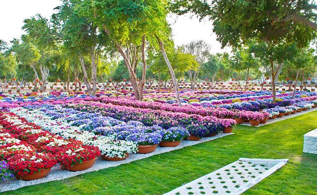Al Ain Paradise, Dubai
