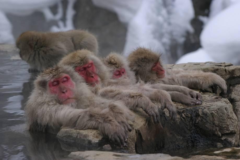 Macacos japoneses costumam passar boa parte do inverno banhando-se em piscinas termais ao ar-livre, como este, o Jigokudani Yaen-koen, em Nagano
