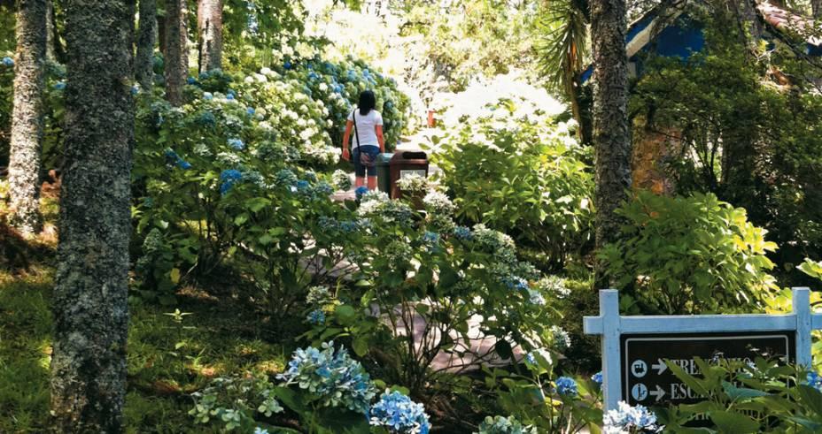 As hortênsias do Parque do Caracol, maior atração da cidade