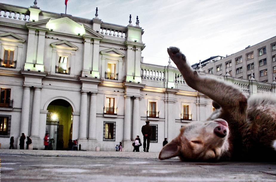 Cachorro se espreguiça em frente ao Palácio de la Moneda em Santiago, no Chile