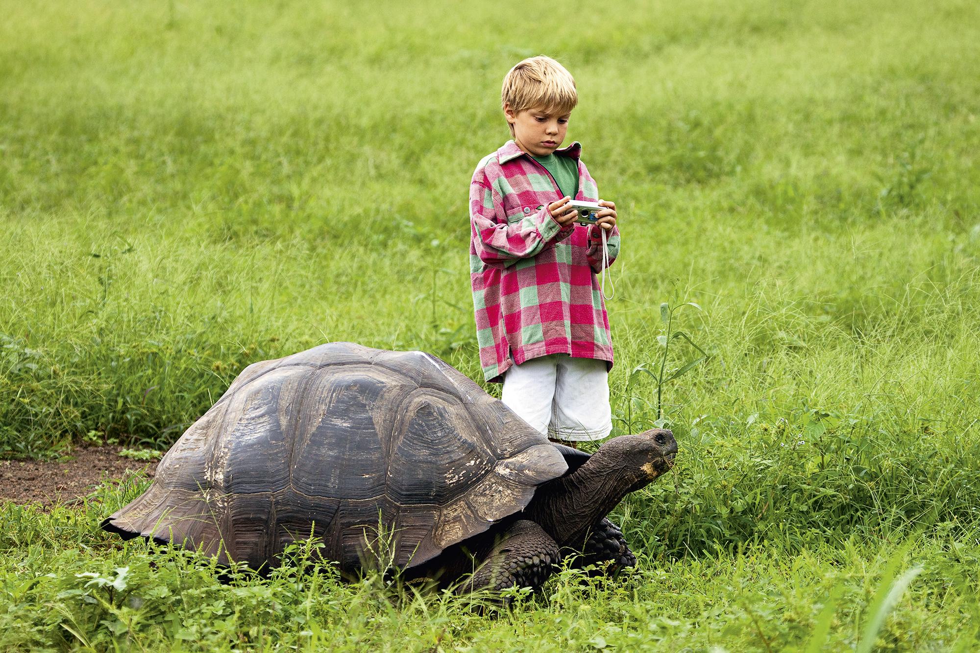 Tartaruga-das-Galápagos