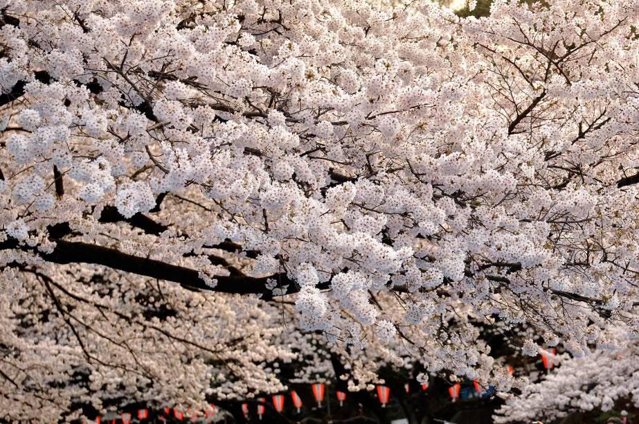 Ueno é um dos mais antigos e queridos parques públicos do país