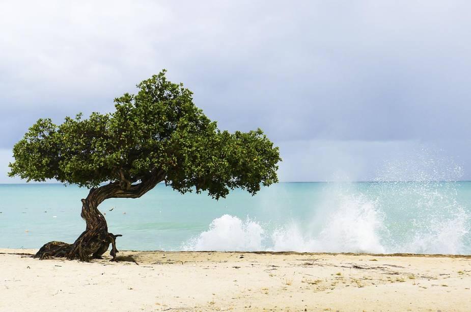 """<a href=""""http://viajeaqui.abril.com.br/paises/aruba"""" rel=""""Aruba"""" target=""""_blank""""><strong>Aruba</strong></a>                        Muito sol e, na hora de buscar um refresco, duas opções: se jogar no mar cálido e cristalino do Caribe ou se refugiar sobre a sombra de uma """"divi-divi"""", a árvore retorcida pelo vento que fica maravilhosamente bonita em fotos e pinturas. Essa é a rotina dos turistas que visitam Aruba, a ilha rechedas de convidativas orlas e, também, centros de compras e jogatina que fascinam muitos forasteiros."""