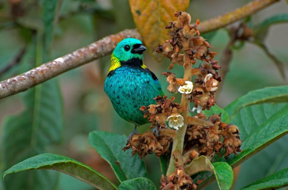 A fauna e a flora da Mata Atlântica são o cenário da trilha