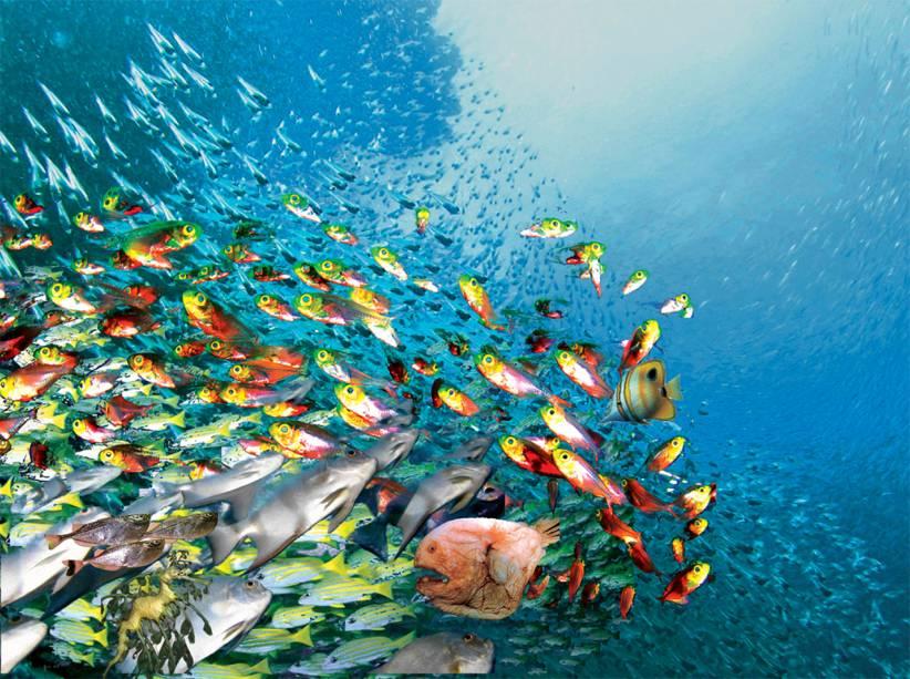 Mergulho em <strong>Turks e Caicos</strong>