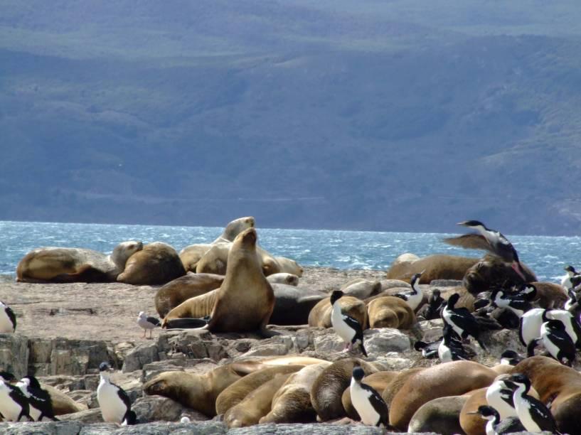 Durante o passeio pelo Canal de Beagle, em Ushuaia, o barco passa pela Isla de Los Lobos, onde leões marinhos se esparramam pelas pedras