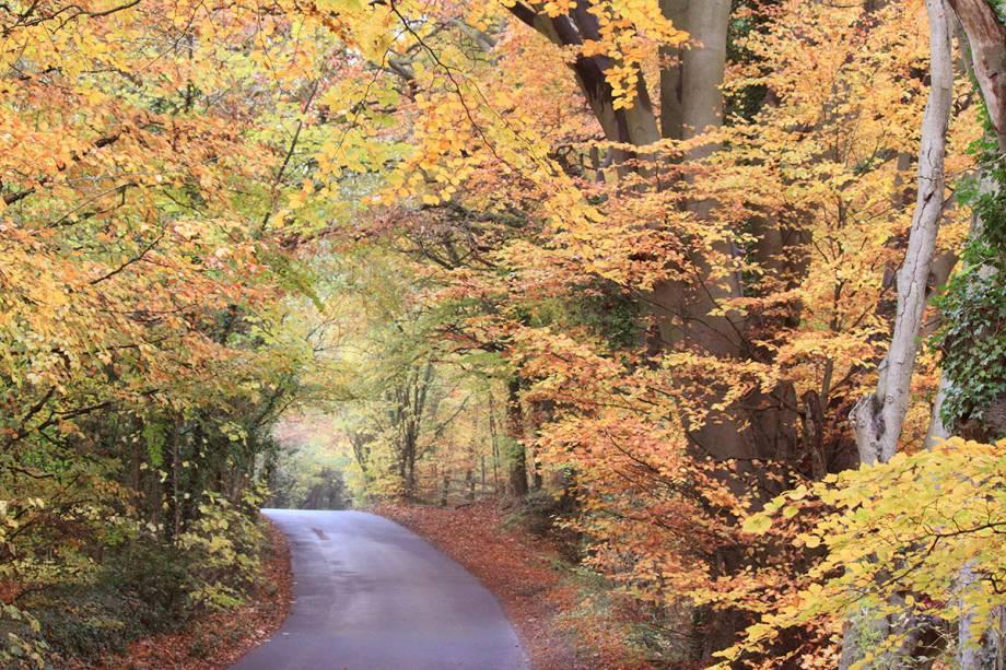 No outono, as cores avermelhadas tomam conta da paisagem e o clima já é tranquilo, com poucos turistas