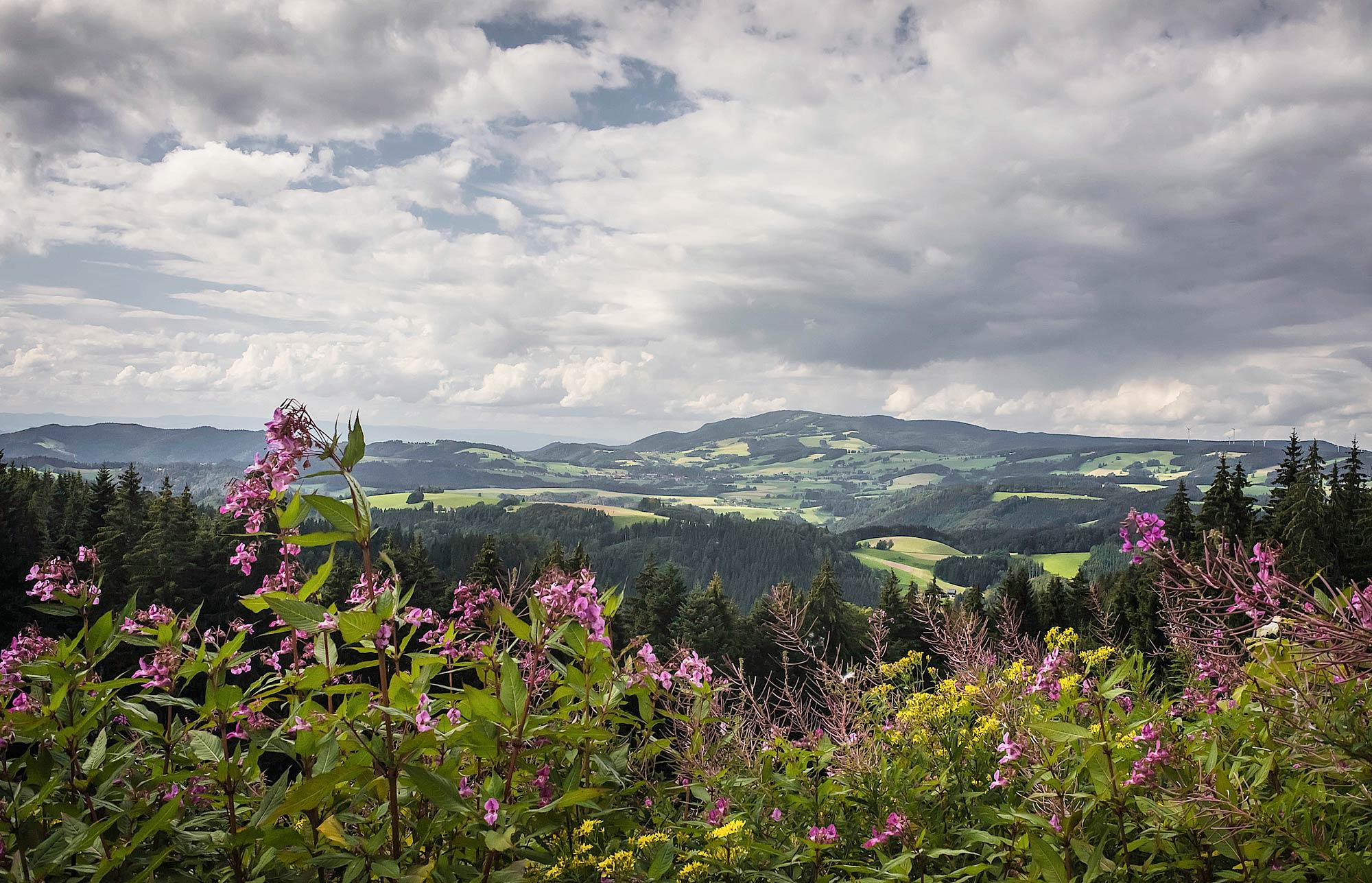 Floresta Negra – Alemanha