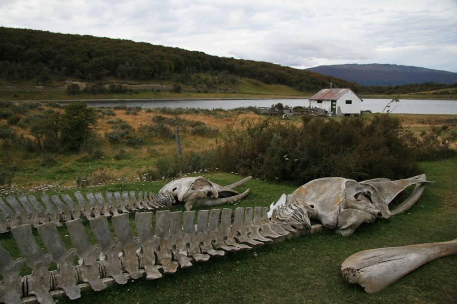 O Museu Acatushún, localizado na Estância Harberton, reúne uma coleção de esqueletos de mais de 2.700 mamíferos marinhos, como baleias e golfinhos, e 2.300 aves