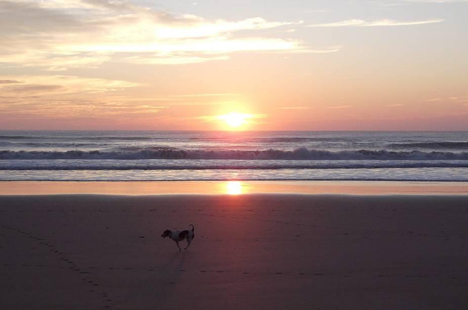 Cachorro brinca na praia de Wainui, em Gisborne, enquanto o sol nasce - a cidade é uma das primeiras do mundo a comemorar a passagem do ano