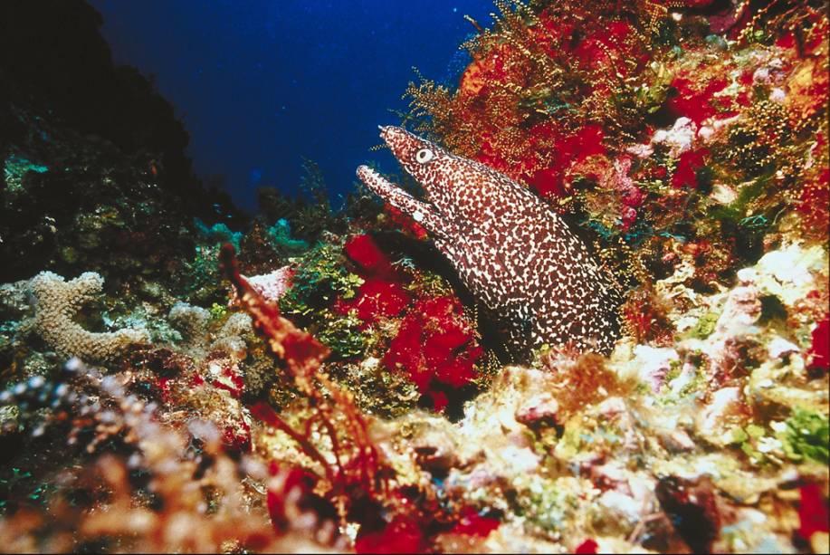 Cozumel fica na região da Riviera Maia, que abriga o segundo maior recife de corais do mundo