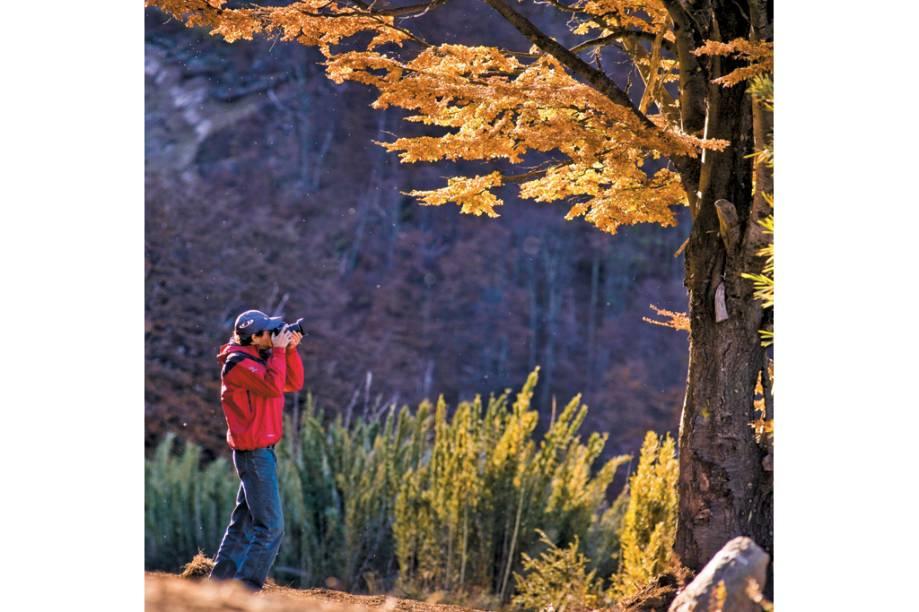 O fotógrafo que plasma as cores de fim de outono das coníferas da região