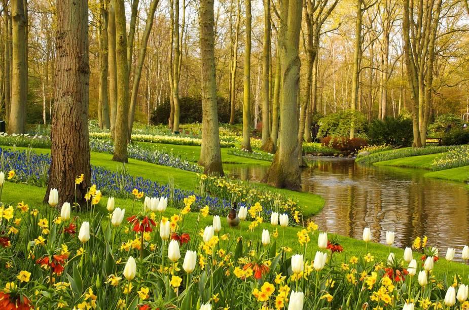 """Durante a primavera no Hemisfério Norte, o <a href=""""http://viajeaqui.abril.com.br/estabelecimentos/holanda-amsterda-atracao-keukenhof-em-lisse"""" rel=""""Parque Keukenhof"""" target=""""_blank"""">Parque Keukenhof</a> fica repleto de flores e abre para visitas - milhares de pessoas viajam para Amsterdã para conhecer o imenso jardim"""