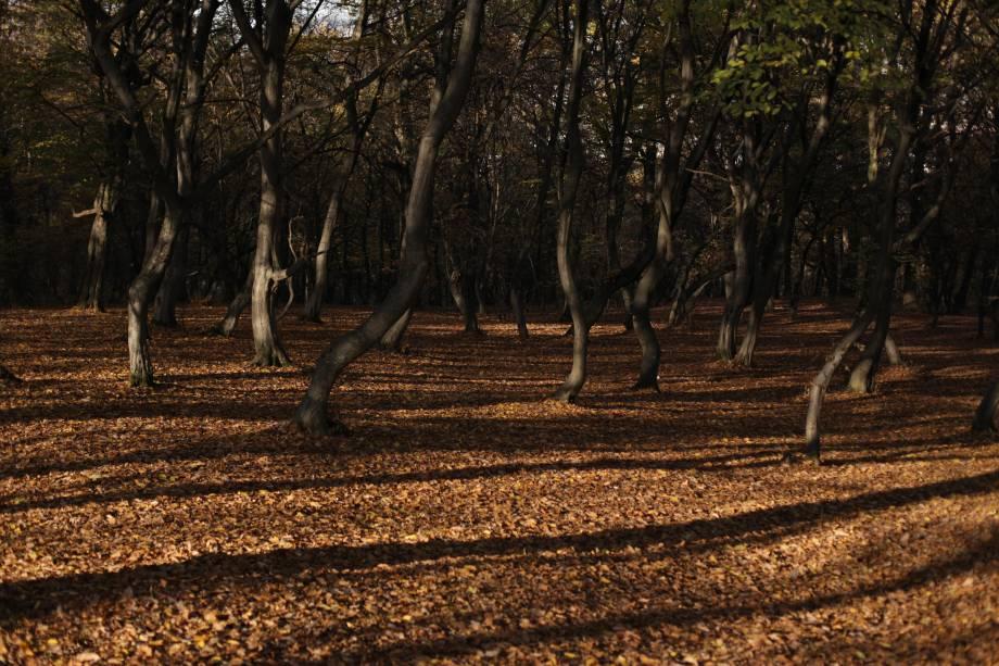 """<strong>9. Floresta de Hoia-Baciu, Cluj-Napoca,<a href=""""http://viajeaqui.abril.com.br/paises/romenia"""" rel=""""Romênia"""" target=""""_self"""">Romênia</a></strong>Que a Romênia tem um quê de sobrenatural, a gente já sabe. Afinal, aqui foi o lar do temível Conde Drácula, vampiro que assombra e seduz há décadas. No entanto, existe uma floresta no país igualmente enigmática, mas menos visitada que o Castelo do dentuço. Em Hoia-Baciu, uma clareira circular convida a um teste macabro: quem passar por ela, corre o risco de atravessar um portal e nunca mais voltar. Quem se arriscou e sobreviveu pra contar a história jura de pés juntos que a sensação é de náuseas e ansiedade por todo o percurso. Dizem que a atmosfera sobrenatural da floresta alterou o formato dos troncos das árvores: se antes eles eram altos e retos, hoje em dia estão completamente retorcidos. E aí, vai encarar?<a href=""""http://www.booking.com/city/ro/cluj-napoca.pt-br.html?sid=efe6c9de408bb8d78e20e017e616e9f8;dcid=4?aid=332455&label=viagemabril-florestasencantadas"""" rel=""""Veja preços de hotéis próximos a Cluj-Napoca no Booking.com"""" target=""""_blank"""">Veja preços de hotéis em Cluj-Napoca no Booking.com</a>"""