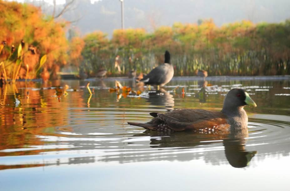 Se você tiver tempo para visitar apenas um parque em Santiago, escolha o Parque Bicentenario, com belos espaços de área verde. Inaugurado em 2010, o local está situado dentro do elegante bairro de Vitacura, cercado por montanhas e imponentes prédios empresariais. Por aqui, é possível andar de bicicleta, fazer piquenique e admirar dois lagos artificiais
