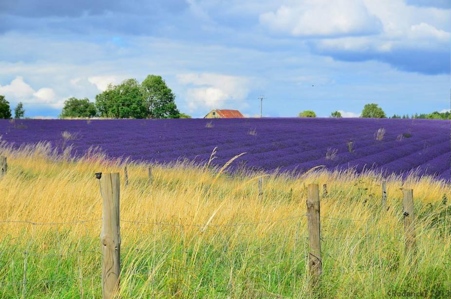 """Não é só a região de <a href=""""http://viajeaqui.abril.com.br/cidades/franca-aixenprovence"""" rel=""""Provence"""" target=""""_blank"""">Provence</a>, na <a href=""""http://viajeaqui.abril.com.br/paises/franca"""" rel=""""França"""" target=""""_blank"""">França</a>, que ostenta campos de lavanda. Costwolds também"""