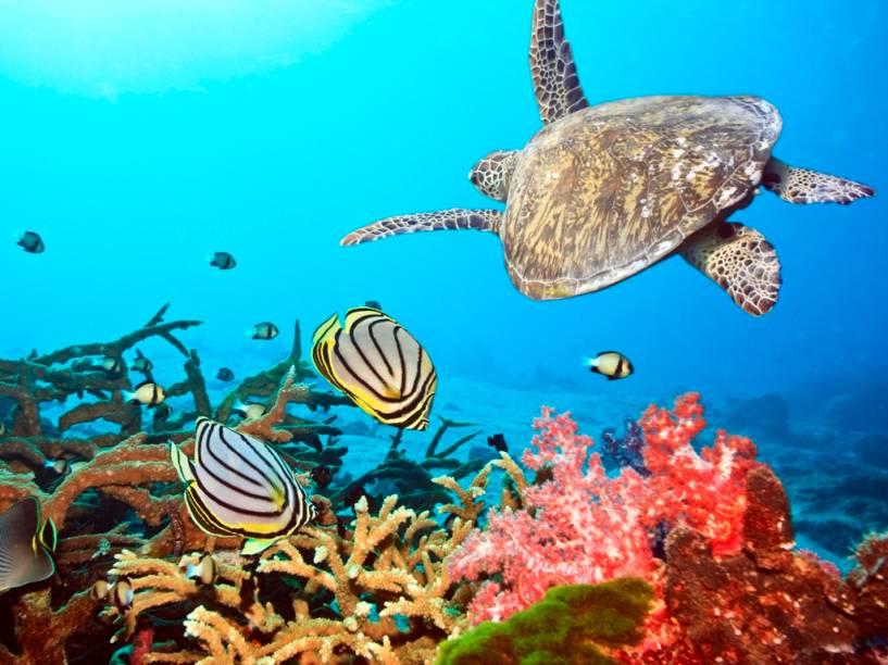 A impressionante diversidade biológica dos mares das Maldivas, notadamente seus recifes de coral, abriga desde espécies pequenas e delicadas, como crustáceos e esponjas, a tartarugas, tubarões-baleia e arraias