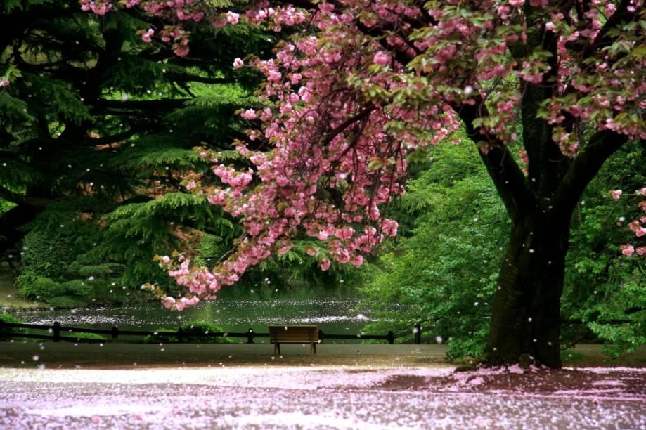 """<strong><a href=""""http://viajeaqui.abril.com.br/cidades/japao-kyoto"""" rel=""""Kyoto"""" target=""""_blank"""">Kyoto</a>, Japão</strong>    Até pouco tempo atrás, você dificilmente veria casais tascando beijos apaixonados nas ruas de <a href=""""http://viajeaqui.abril.com.br/cidades/japao-toquio"""" target=""""_blank"""">Tóquio</a>. O máximo do atrevimento viria de jovens colegiais trocando selinhos, muitos risinhos e nhé-nhé-nhé. As coisas até que estão mudando, mas os japoneses continuam uma sociedade bastante pudica. Mas, convenhamos, como vocês não são japoneses, aproveitem as pétalas de cerejeira caindo sobre suas cabeças para manifestar seu afeto. Quem sabe assim vocês inspiram uns casaizinhos locais?    O <a href=""""http://viajeaqui.abril.com.br/paises/japao"""" target=""""_blank"""">Japão</a> inteiro fica banhado em cores que vão do branco ao rosa-cheguei no começo da primavera, mas nada como apreciar as cerejeiras e ameixeiras em flor em <a href=""""http://viajeaqui.abril.com.br/cidades/japao-kyoto"""" target=""""_blank"""">Kyoto</a>, a antiga capital do país"""