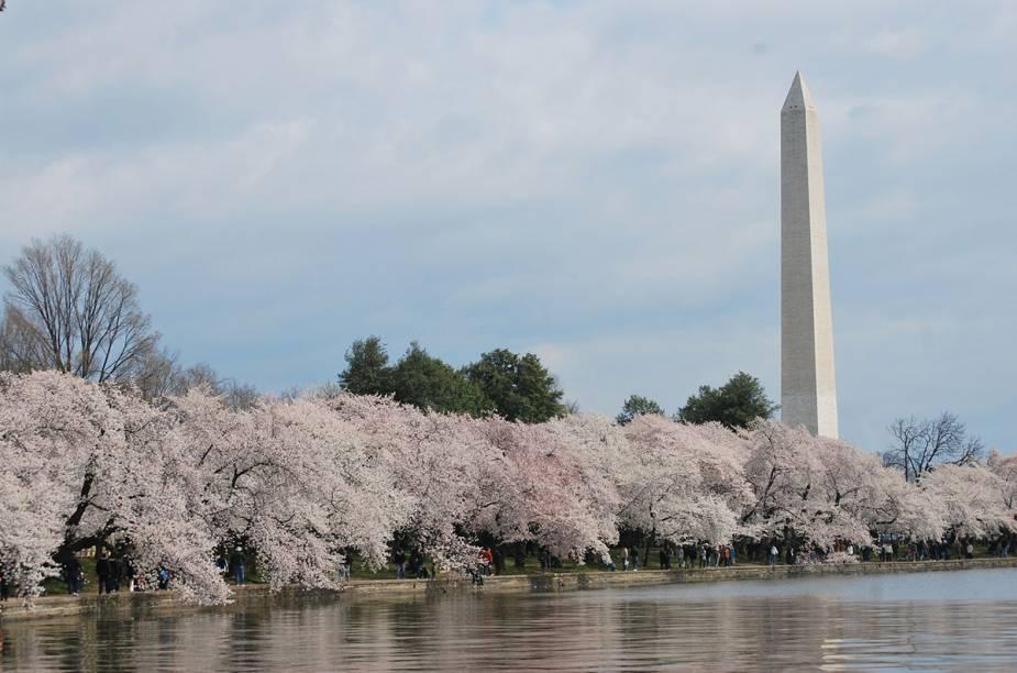 Dois ilustres conhecidos da cidade, o Monumento a Washington e as cerejeiras. O memorável e o despojado, sacou?
