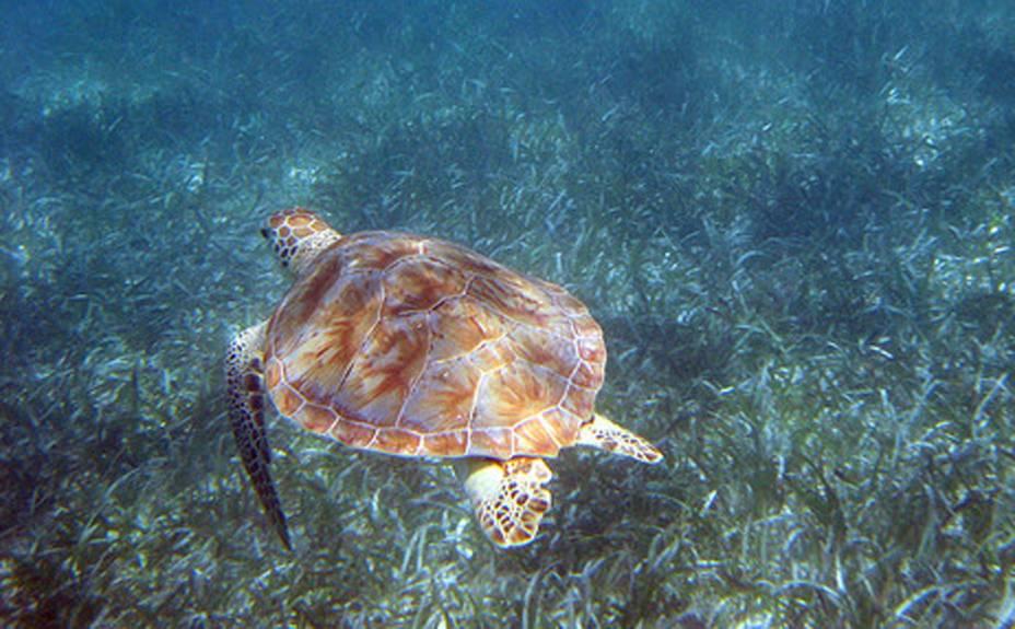 "<strong>6. Akumal</strong>Fica a 90 quilômetros de Cancún e é destino certo para quem quer apreciar o balé das tartarugas marinhas. Na língua maia, a propósito, akumal significa ""lugar de tartarugas"""