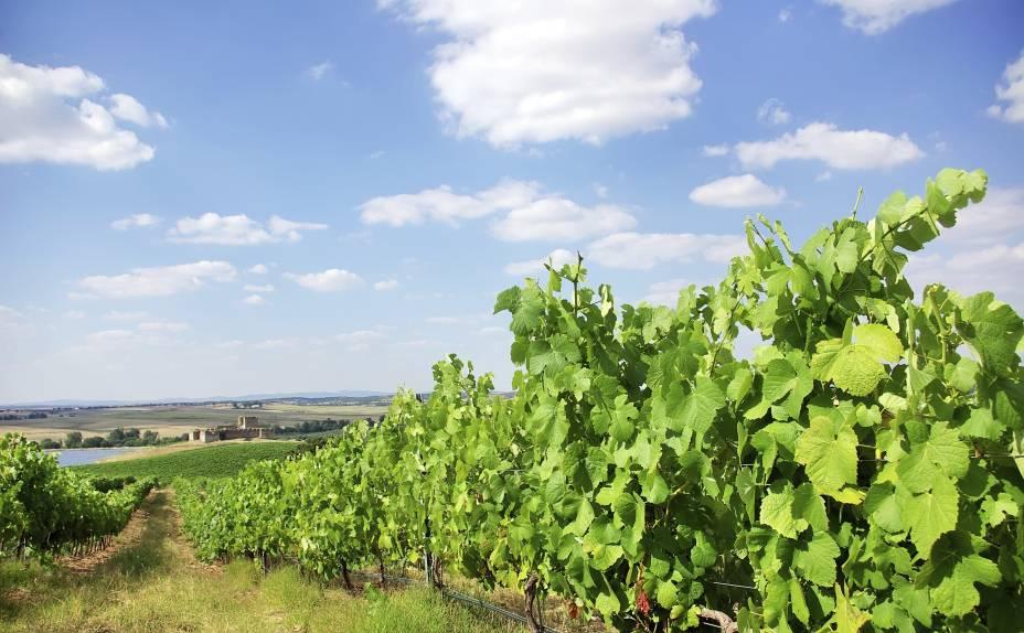 """<strong>Alentejo, <a href=""""http://viajeaqui.abril.com.br/paises/portugal"""" rel=""""Portugal"""" target=""""_self"""">Portugal</a></strong>Tão importante quanto o Douro para a cultura dos vinhos portugueses, o Alentejo é conhecido por suas encostas íngremes, onde são plantadas grande parte de suas vinhas. Além dos vinhos de produção industrial, é possível encontrar pequenas propriedades, cujo foco é a produção de bons vinhos artesanais. Entre as uvas que se destacam na região, estão a Touriga Nacional e a Syrah<em><a href=""""http://www.booking.com/region/pt/rota-dos-vinhos-do-alentejo.pt-br.html?aid=332455&label=viagemabril-vinicolas-da-europa"""" rel=""""Veja preços de hotéis na região do Alentejo no Booking.com"""" target=""""_blank"""">Veja preços de hotéis na região do Alentejo no Booking.com</a></em>"""