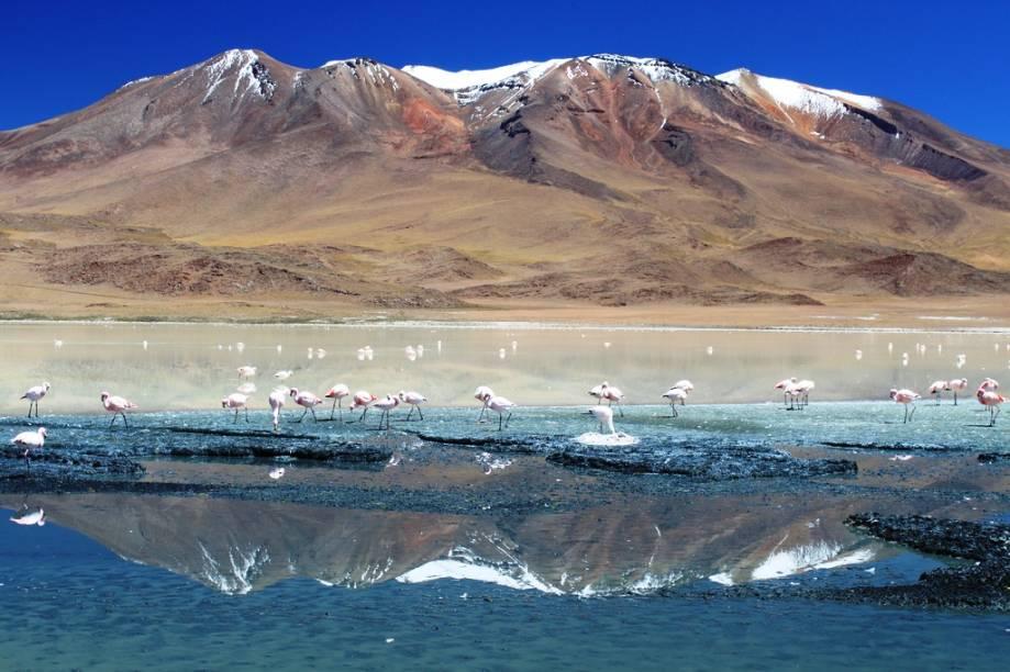 """<strong>Altiplano Andino, Bolívia</strong> A <a href=""""http://viajeaqui.abril.com.br/paises/bolivia"""">Bolívia </a>possui paisagens simplesmente arrebatadoras. A região do altiplano reserva maravilhas naturais como lagunas policromáticas, vulcões e uma fauna singular. Esta é uma viagem para toda uma vida.<em><a href=""""https://www.booking.com/searchresults.pt-br.html?aid=332455&lang=pt-br&sid=eedbe6de09e709d664615ac6f1b39a5d&sb=1&src=searchresults&src_elem=sb&error_url=https%3A%2F%2Fwww.booking.com%2Fsearchresults.pt-br.html%3Faid%3D332455%3Bsid%3Deedbe6de09e709d664615ac6f1b39a5d%3Bclass_interval%3D1%3Bdest_id%3D75%3Bdest_type%3Dcountry%3Bdtdisc%3D0%3Bfrom_sf%3D1%3Bgroup_adults%3D2%3Bgroup_children%3D0%3Binac%3D0%3Bindex_postcard%3D0%3Blabel_click%3Dundef%3Bno_rooms%3D1%3Boffset%3D0%3Bpostcard%3D0%3Braw_dest_type%3Dcountry%3Broom1%3DA%252CA%3Bsb_price_type%3Dtotal%3Bsearch_selected%3D1%3Bsrc%3Dsearchresults%3Bsrc_elem%3Dsb%3Bss%3DPolin%25C3%25A9sia%2520Francesa%3Bss_all%3D0%3Bss_raw%3DPolin%25C3%25A9sia%2520Francesa%3Bssb%3Dempty%3Bsshis%3D0%3Bssne_untouched%3DAustr%25C3%25A1lia%26%3B&ss=Bol%C3%ADvia&ssne=Polin%C3%A9sia+Francesa&ssne_untouched=Polin%C3%A9sia+Francesa&checkin_monthday=&checkin_month=&checkin_year=&checkout_monthday=&checkout_month=&checkout_year=&no_rooms=1&group_adults=2&group_children=0&highlighted_hotels=&from_sf=1&ss_raw=Bol%C3%ADvia&ac_position=0&ac_langcode=xb&dest_id=26&dest_type=country&search_pageview_id=44067821693500b2&search_selected=true&search_pageview_id=44067821693500b2&ac_suggestion_list_length=5&ac_suggestion_theme_list_length=0"""" target=""""_blank"""" rel=""""noopener"""">Busque hospedagens na Bolívia no Booking.com</a></em>"""