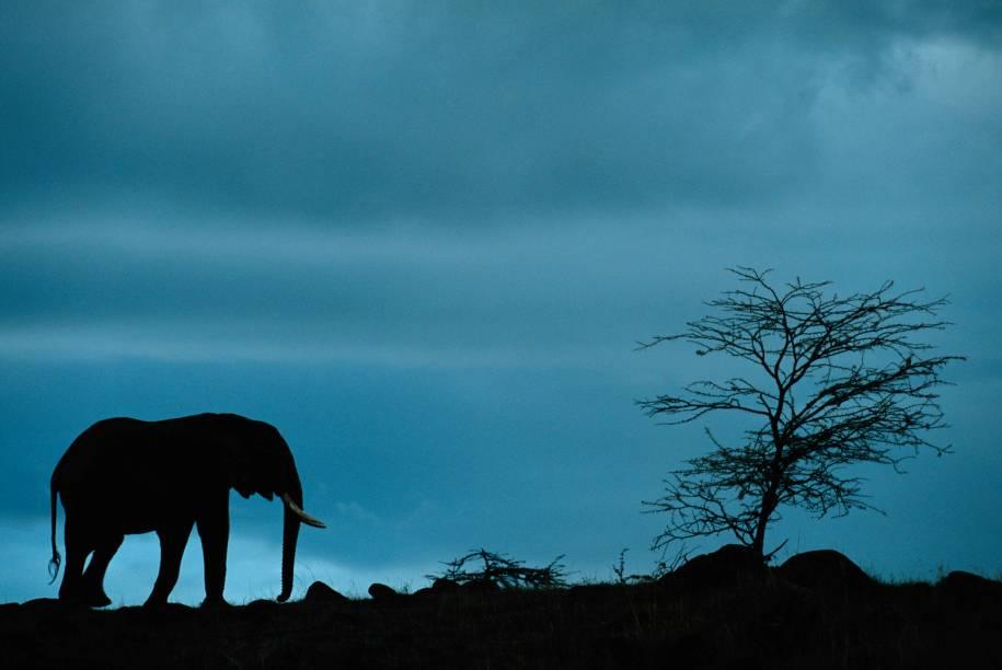O Parque Nacional Masai Mara, no Quênia, é um dos melhores destinos para se deparar com a fauna das savanas, como o imponente elefante africano