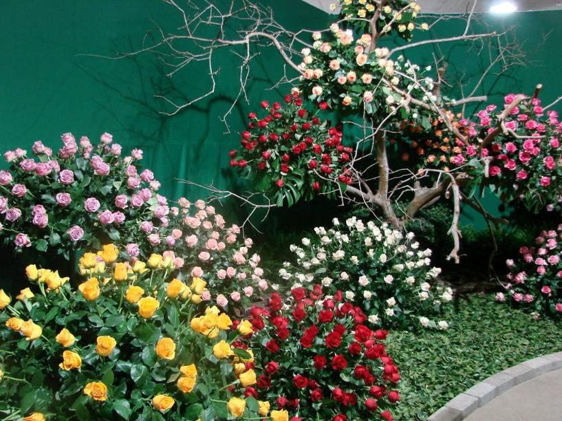 Flores expostas na Festa de Flores e Morangos de Atibaia - edção de 2012