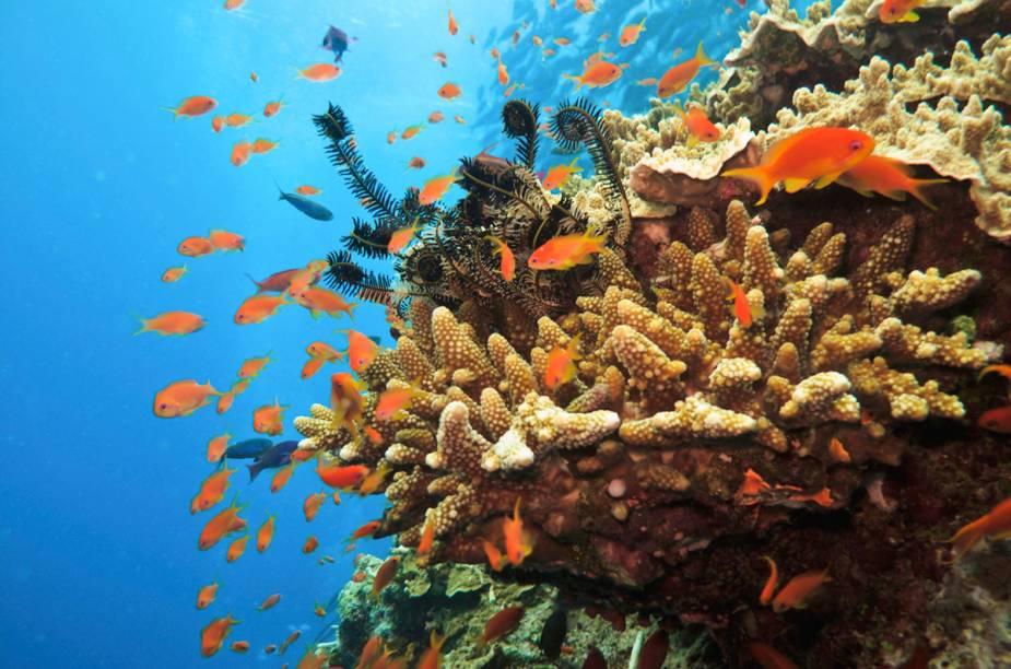 """<a href=""""http://viajeaqui.abril.com.br/paises/australia"""" rel=""""Austrália"""" target=""""_blank""""><strong>Austrália</strong></a>O país é conhecido por abrigar belas praias da <a href=""""http://viajeaqui.abril.com.br/continentes/oceania"""" rel=""""Oceania"""" target=""""_blank"""">Oceania</a> e ser point de surfistas do mundo todo. A <a href=""""http://viajeaqui.abril.com.br/paises/australia"""" rel=""""Austrália"""" target=""""_blank"""">Austrália</a>, porém, tem também muito a oferecer aos mergulhadores. É lá onde está localizado o mais longo recife do mundo – com cerca de 2 mil quilômetros de extensão -, chamado de <a href=""""http://viajeaqui.abril.com.br/estabelecimentos/australia-cairns-atracao-grande-barreira-de-coral"""" rel=""""Grande Barreira de Corais"""" target=""""_blank"""">Grande Barreira de Corais</a> (foto). Ali há no mínimo 2,8 mil tipos diferentes de corais, com cores variadas, além de uma riquíssima vida marinha. Polvos, lulas, peixes e tubarões fazem parte da fauna que o mergulhador encontra por lá.É possível praticar snorkel e ter visibilidade quase tão boa quanto a de um mergulhador com cilindro. Passeios ainda disponibilizam exploração por caminhada subaquática, em que o turista usa uma espécie de capacete para respirar sob a água; submarino; e o próprio mergulho com cilindros. A temperatura da água é de, em média, 25°C e entre os meses de abril e novembro está o melhor período para mergulhar na <a href=""""http://viajeaqui.abril.com.br/paises/australia"""" rel=""""Austrália"""" target=""""_blank"""">Austrália</a>. A língua oficial do país é o inglês e a moeda é o dólar australiano."""
