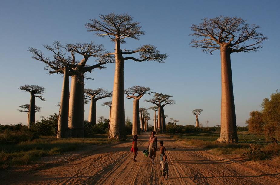 Mesmo em restaurantes mais isolados, como os da Avenida dos Baobás, encontra-se muito rum (na página ao lado). De longe a bebida preferida na ilha, ele aparece aromatizado com tudo o que é tipo de frutas e especiarias