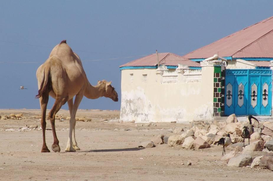 <strong>BERBERA </strong>Associada ao caos, à violência e a piratas, a Somália é sem duvida um lugar perigoso, mas um pouco mais complexo do que a mídia noticia: atualmente, dentro do território somali, existe um local chamado República da Somalilândia que, apesar de não reconhecido como nação por muitos países do mundo, tem um governo próprio (totalmente descolado de Mogadíscio) e um cenário relativamente seguro para turistas.