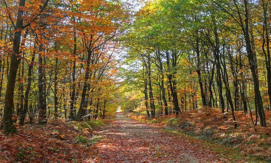 """Com seus bosques de carvalho, coníferas e faias, a floresta Bercé, no <a href=""""http://viajeaqui.abril.com.br/cidades/franca-vale-do-loire"""" rel=""""Vale do Loire"""" target=""""_blank"""">Vale do Loire</a>, é considerada uma das mais bonitas da <a href=""""http://viajeaqui.abril.com.br/paises/franca"""" rel=""""França"""" target=""""_blank"""">França</a><a href=""""http://viajeaqui.abril.com.br/materias/florestas-encantadas-pelo-mundo"""" rel=""""+ Fotos: 36 florestas encantadas pelo mundo"""" target=""""_blank""""><strong>+ Fotos: 36 florestas encantadas pelo mundo</strong></a>"""