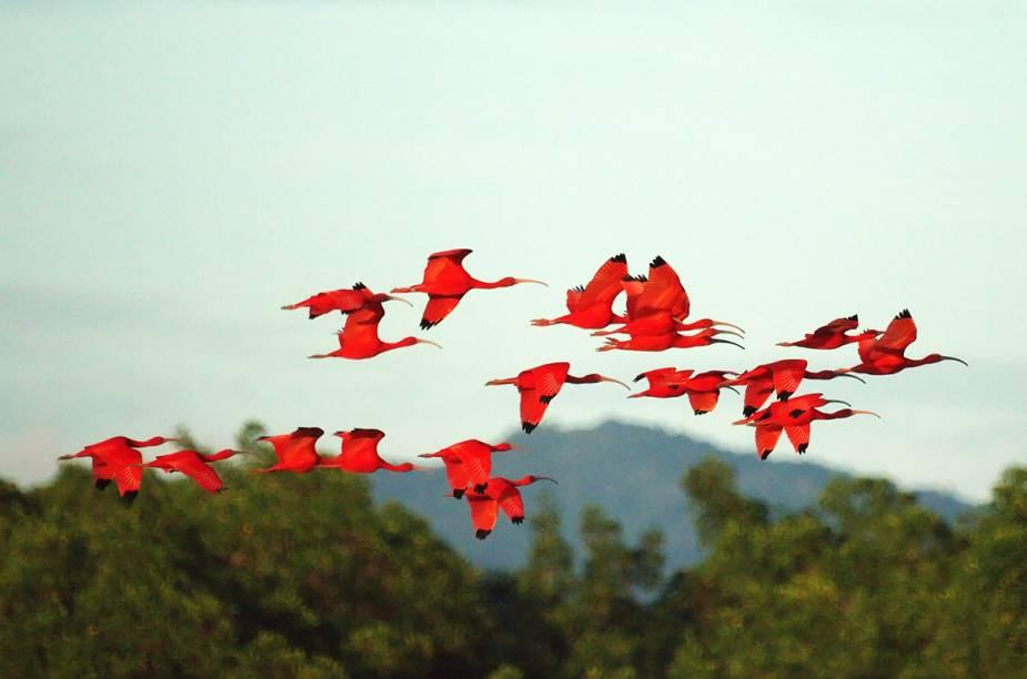 <em>Birdwatching </em>é uma atividade comum na ilha de Trinidad.