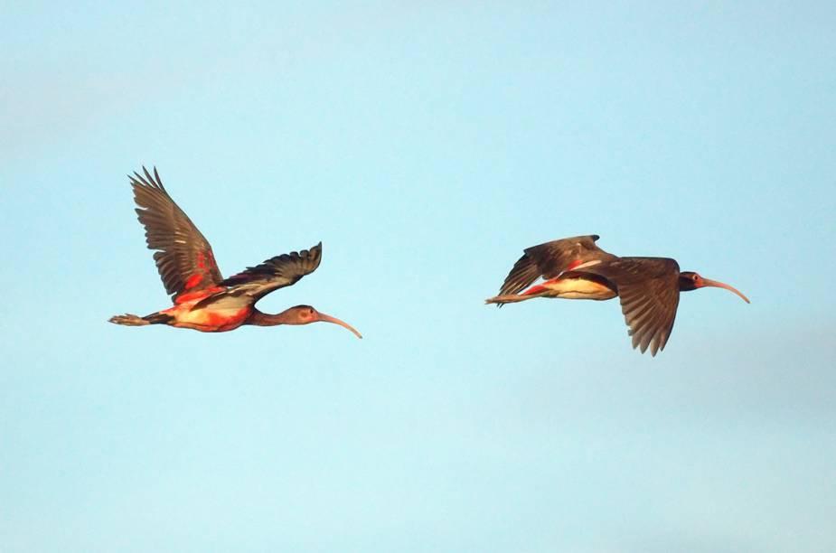 A ilha de Trinidad tem mais de 450 espécies de pássaros