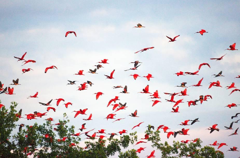 <em>Birdwatching</em> em Trinidad