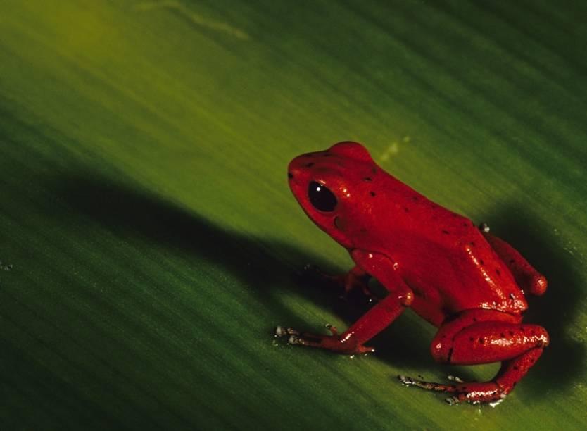 A fauna de Bocas del Toro surpreende pelas espécie raras, muitas vezes endêmicas