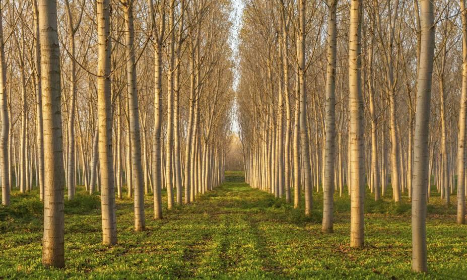 """<strong>4. Bosque de Álamos, Oregon, <a href=""""http://viajeaqui.abril.com.br/paises/estados-unidos"""" rel=""""Estados Unidos"""" target=""""_self"""">Estados Unidos</a></strong>                            Os álamos são espécies típicas de florestas boreais, com folhas que ficam amareladas antes de caírem. No Estado do Oregon, há diversos bosques com árvores do tipo, apontadas pelas crenças do Hemisfério Norte como símbolos de prosperidade para o ser humano. Muitas pessoas acreditam que elas auxiliam contra picadas de cobra, por exemplo. Já na mitologia grega, Hércules teria usado uma coroa com suas folhas ao resgatar o cão de três cabeças do mundo inferior de Hades. Ou seja: ela também impulsiona a força."""