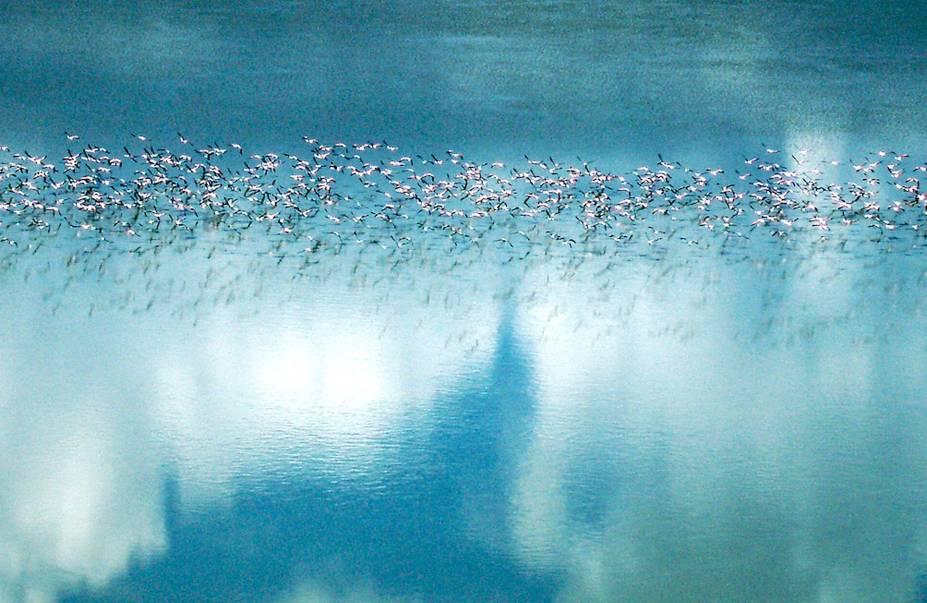 Migração de Flamingos, Botsuana