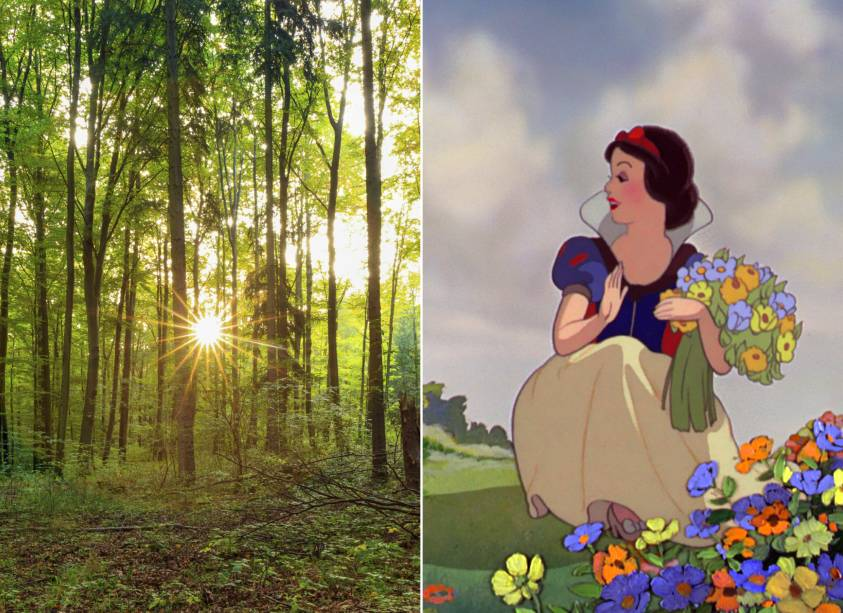 """<strong>Floresta Negra, <a href=""""http://viajeaqui.abril.com.br/paises/alemanha"""" rel=""""Alemanha"""" target=""""_self"""">Alemanha</a> (<em>Branca de Neve e os Sete Anões</em>)</strong>        Comer uma maçã envenenada, dormir por dias e ser acordada por um príncipe. A fórmula é das mais tradicionais, mas é na relação com a madrasta que Branca de Neve tem a essência de toda a história. Afinal de contas, quem não conhece os dizeres: <em>""""Espelho, espelho meu. Quem é mais bela do que eu?""""</em>A Floresta Negra alemã, que inspirou os cenários do filme, já foi palco de muitas lendas e histórias, sobretudo dos Irmãos Grimm. Até hoje, paira uma atmosfera mágica por ali que encanta os visitantes        <em><a href=""""http://www.booking.com/region/de/baden-wurttemberg.pt-br.html?aid=332455&label=viagemabril-destinos-inspiradores-dos-estudios-disney"""" rel=""""Veja preços de hotéis próximos à Floresta Negra no Booking.com"""" target=""""_blank"""">Veja preços de hotéis próximos à Floresta Negra no Booking.com</a></em>"""