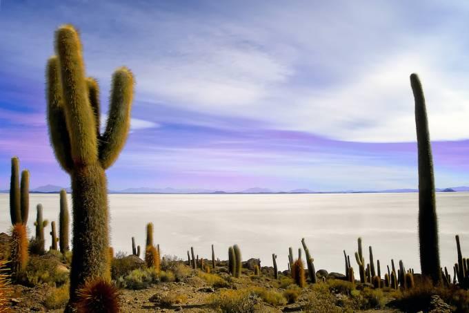 Isla del Pescado, Salar de Uyuni, Bolívia