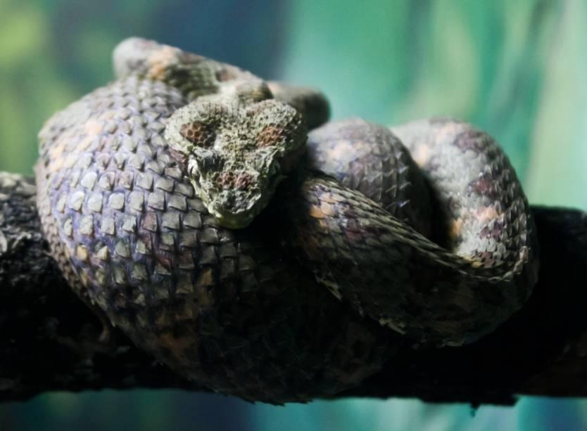 O Instituto Butantan possui o maior acervo de cobras e serpentes do mundo