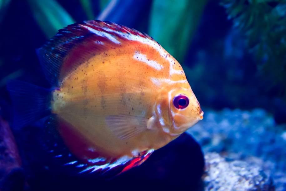 O Instituto Butantan possui diversas espécies de peixes brasileiros