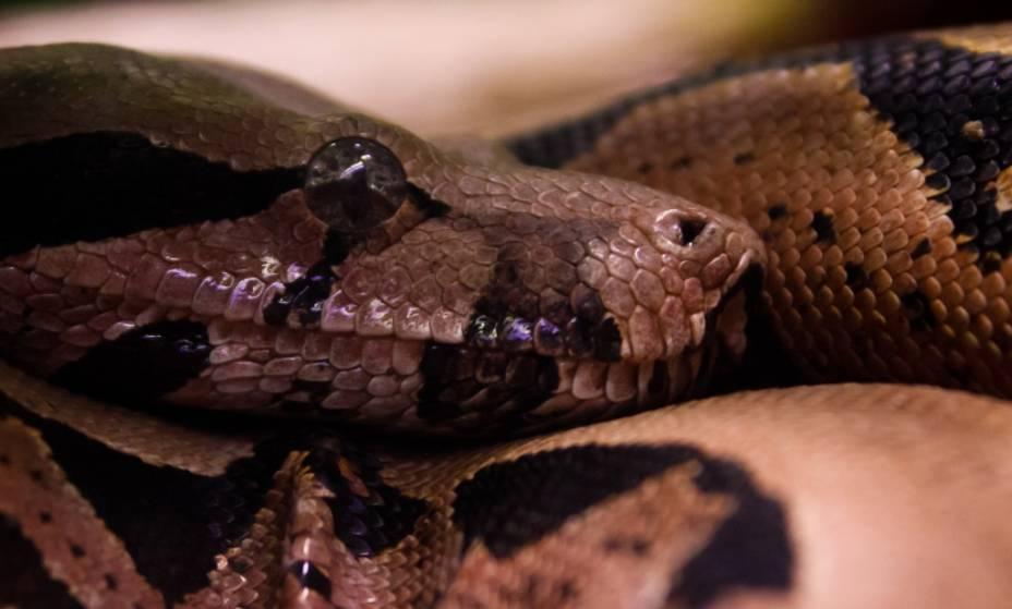 O Instituto Butantan abriga a maior coleção de espécies de cobras e serpentes do mundo