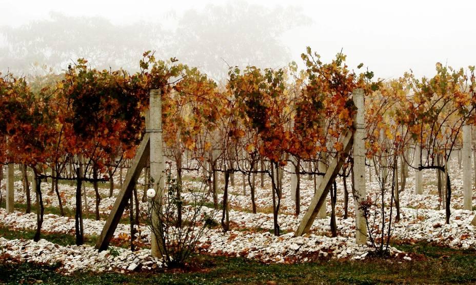 """<a href=""""http://viajeaqui.abril.com.br/cidades/br-rs-bento-goncalves"""" rel=""""3. Bento Gonçalves(RS)"""" target=""""_self""""><strong>1. Bento Gonçalves(RS)</strong></a>                                                                    Aqui, as vinícolas são as grandes protagonistas, com diversas opções de passeios e degustações"""