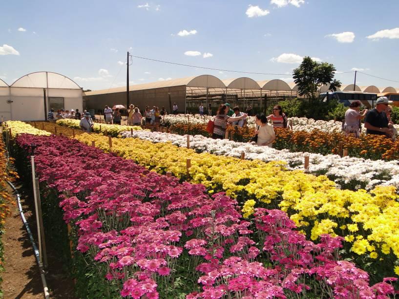 O evento é considerado o maior da América Latina voltado para o setor da floricultura