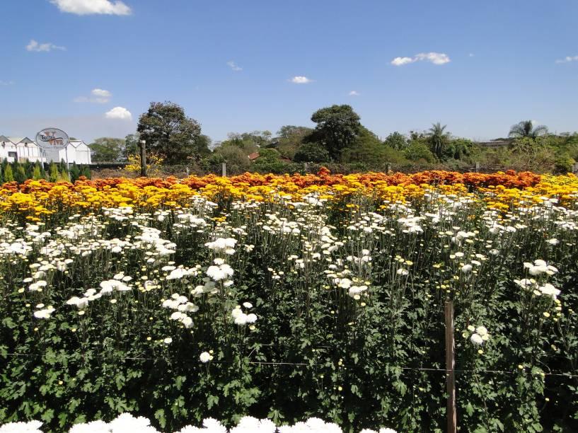 Nesse ano, a 34ª edição da Expoflora, que acontece anualmente em Holambra, espera aproximadamente 300 mil visitantes