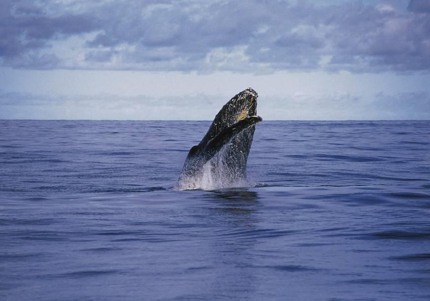 """De julho a novembro é possível ver baleias-jubartes em passeios no <a href=""""http://viajeaqui.abril.com.br/estabelecimentos/br-ba-caravelas-atracao-parque-nacional-marinho-dos-abrolhos"""" rel=""""Parque Nacional Marinho dos Abrolhos"""" target=""""_self""""><strong>Parque Nacional Marinho dos Abrolhos</strong></a>, <a href=""""http://viajeaqui.abril.com.br/estados/br-bahia"""" rel=""""Bahia"""" target=""""_self"""">Bahia</a>"""