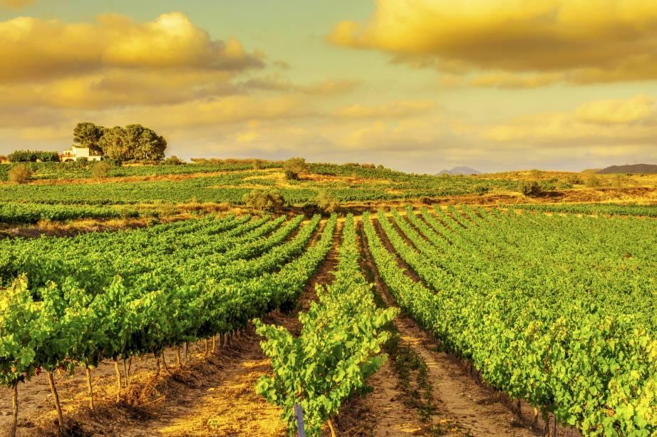 """<strong>Catalunha, <a href=""""http://viajeaqui.abril.com.br/paises/espanha"""" rel=""""Espanha"""" target=""""_self"""">Espanha</a></strong>Conhecida por sua rica gastronomia, voltada para a cultura do Mediterrâneo, a Catalunha possui treze sub-regiões vinícolas que movimentam o setor local. Uvas das castas Chardonnay e Cabernet Sauvignon são as mais abundantes da região. Um de seus rótulos mais emblemáticos é o Cava - espumante espanhol com identidade marcante. Outro ponto forte do turismo local são os belos mosteiros, um bônus para casais em viagens românticas<em><a href=""""http://www.booking.com/region/es/catalonia.pt-br.html?aid=332455&label=viagemabril-vinicolas-da-europa"""" rel=""""Veja preços de hotéis na Catalunha no Booking.com"""" target=""""_self"""">Veja preços de hotéis na Catalunha no Booking.com</a></em>"""